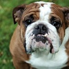 Up to 52% Off Dog-Education Classes