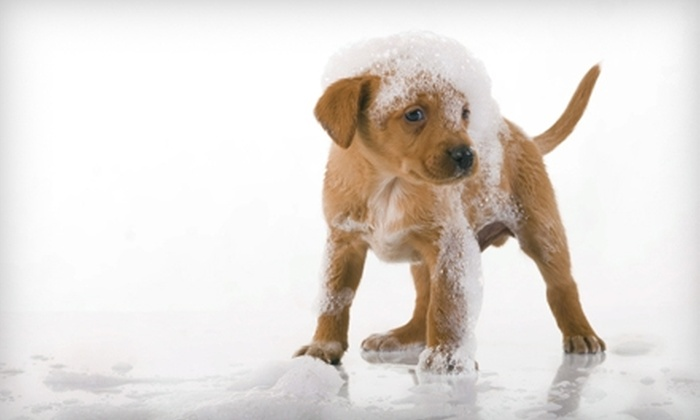Paws Veterinary Clinic of Springfield - Springfield: $20 for Dog Grooming at Paws Veterinary Clinic of Springfield (Up to $65 Value)