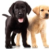 Up to 56% Off Admission to Humane-Society Benefit