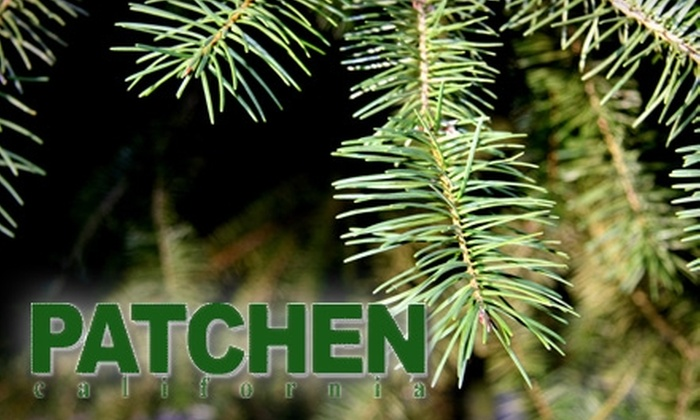 Patchen California - San Lorenzo Valley: $20 for $40 Worth of Self-Cut Christmas Trees, Wreaths, and More at Patchen California in Los Gatos