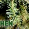 Half Off Self-Cut Christmas Trees in Los Gatos
