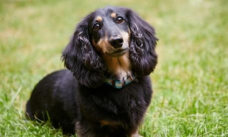 Paga 15€ y obtén un descuento de hasta 100€ en la esterilización de mascotas en Hostal Mascotas Veterinario Oferta en Groupon