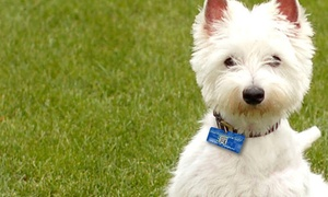 Smart Shopper Card: One or Two Custom QR-Code Pet Tags from Smart Shopper Card (Up to 52% Off)