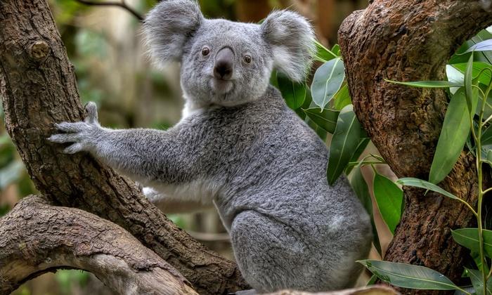 Zoo duisburg online ticket
