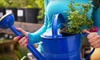Toms Creek Nursery and Landscaping - Denton: $20 for $40 Worth of Grass, Flowers, and Trees at Toms Creek Nursery and Landscaping near Denton