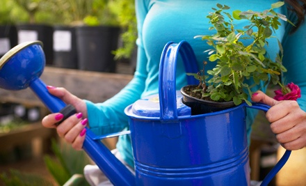 $40 Groupon to Toms Creek Nursery and Landscaping - Toms Creek Nursery and Landscaping in Denton