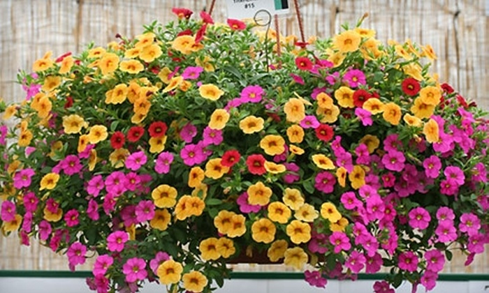 Foertmeyer & Sons Greenhouse Co. - Concord: $10 for $30 Worth of Plants and Flowers at Foertmeyer & Sons Greenhouse Co. in Delaware