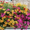 $10 for Plants and Flowers in Delaware