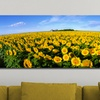 """36""""x12"""" and 48""""x16"""" Panoramic Flower Photography on Canvas"""