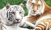 Cougar Mountain Zoo - Montreux: Annual Zoo Membership for Two or Two Admissions to the Reindeer Festival at Cougar Mountain Zoo (Up to 29% Off)