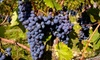 Heritage Vineyards - Richwood: $19 for Wine and Lunch for Two at Heritage Vineyards in Mullica Hill (Up to $38 Value)