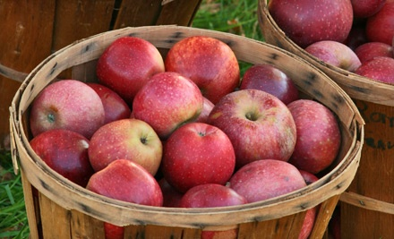 Two Admissions to the Pumpkin Patch and $10 Toward Pumpkins, Produce, or Specialty Groceries (a $16 value) - Livesay Orchards in Porter