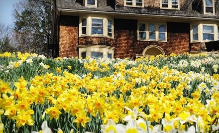 Reeves-Reed Arboretum: Family Admission to Daffodil Day on Sun., Apr. 10 at 1PM - Reeves-Reed Arboretum in Summit
