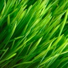 60% Off Lawn-Cleanup Package