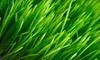 Lawn Salawn: $99 for Fall Lawn-Cleanup Package from Lawn Salawn ($250 Value)