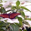 Get Ohio Tourism Deals: Up to Half Off Tickets to The Butterfly House