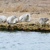 Up to 48% Off Seal-Watching Cruise