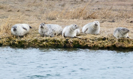 Seal-Watching Cruise for Two or a Family of Four from Freeport Water Taxi & Tours (50% Off)