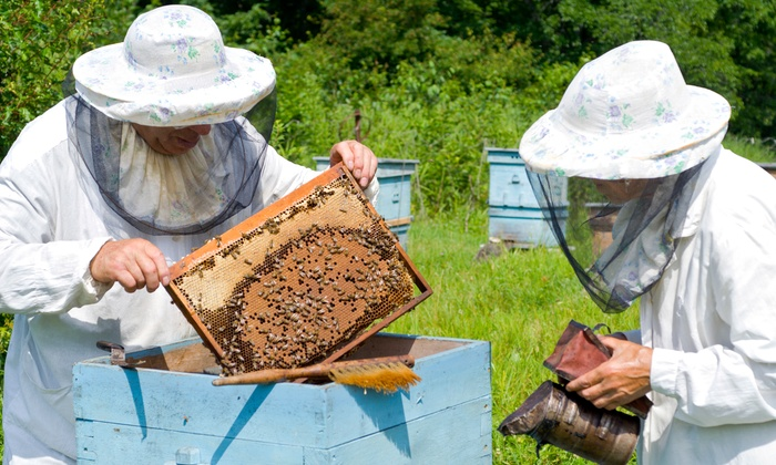 Denver Urban Homesteading - Baker: Intro Beekeeping Class with Jars of Honey for Two at Denver Urban Homesteading (38% Off). Three Dates Available.