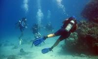 2 o 4 inmersiones de buceo para una persona desde 29,95 € en Buceo Pelicar