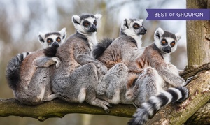 Duke Lemur Center: Lemurs Live! Tour for 2 or Behind-the-Scenes Weekend or Weekday Tour for 1 at Duke Lemur Center (Up to 42% Off)