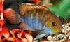 Blue Marlin Aquatic Creations - Thousand Oaks: $50 for $100 Worth of Services at Blue Marlin Aquatic Creations