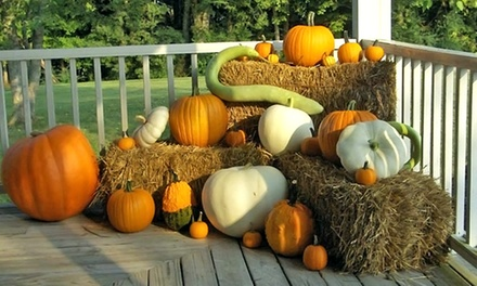 $13 for Pumpkins, Corn Stalks, Hay Bales, and Other Fall Items from Malinoski Farm ($25 Value)