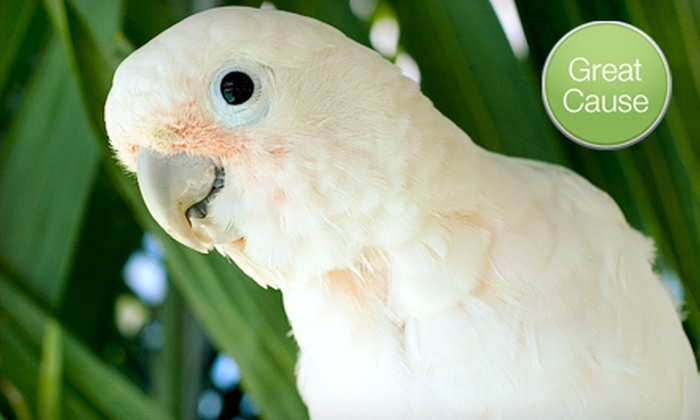 Feathered Friends Forever Parrot Rescue and Refuge - Grovetown-Harlem: $10 Donation to Protect Tropical Birds
