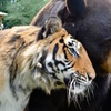Up to 34%  Off Animal Sanctuary Tour
