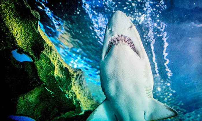 Greater Cleveland Aquarium - Ohio City: $79 for a Family Annual Pass to Greater Cleveland Aquarium ($130 Value)