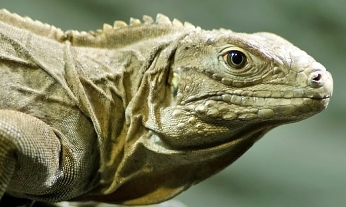 Little Ray's Reptile Zoo - Stipley: Admission for Two or Four to Little Ray's Reptiles Zoo or an At-Home Birthday Party Package (Up to 41% Off)