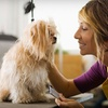 Up to 54% Off Dog Grooming at Dirty Dawgz
