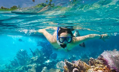 image for Full-Day Snorkel Rental for One or Two People with Optional Wetsuit Rental at La Jolla Outpost (Up to 58% Off)