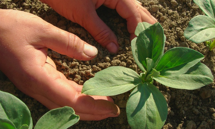 Stearns Peat Company, Inc. - Tampa Bay Area: $50 or $100 Worth of Agricultural Material from Stearns Peat Company, Inc. (Up to 55% Off)