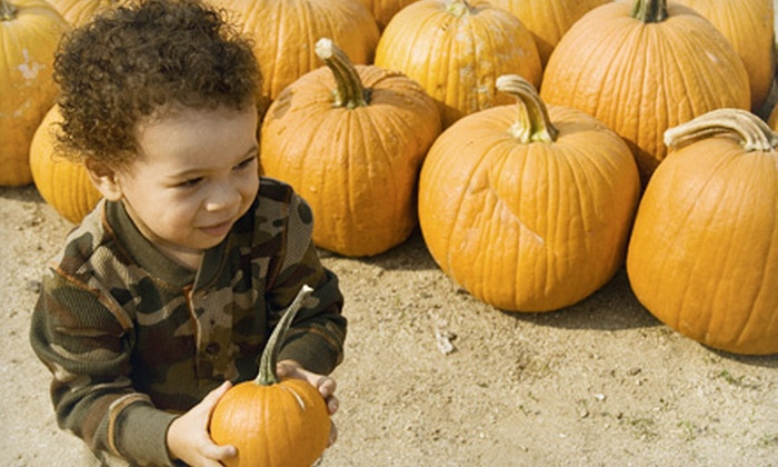 Woodside Nursery & Garden Center - East Patchogue: $12 for Halloween Festival with Pumpkins for Two at Woodside Nursery and Garden Center ($27 Value)