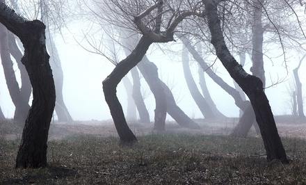 Race Entry for One or Two in the Haunted Woods 5K Presented by Play Loud Clothing (51% Off)