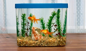 Custom Reef And Aquarium: $11 for $20 Worth of Aquariums — Custom Reef and Aquarium
