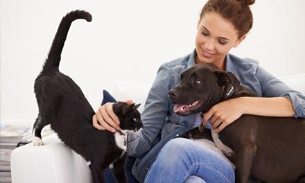 Sesión de peluquería, limpieza bucal o esterilización para perro o gato desde 9,95 € en Canitas Málaga