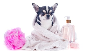 Lorines Salon Pielęgnacji Psów: Psi fryzjer: pakiet dla psa rasy małej (49,99 zł), średniej (59,99 zł) i więcej w Salonie Pielęgnacji Psów Lorines