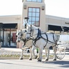 Up to 55% Off Horse-Drawn Wagon or Carriage Ride