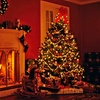 Up to 37% Off Locally-Sourced Christmas Trees from NYC Trees
