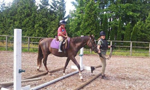 Cambridge Stables: One, Two, or Four 60-Minute Horseback-Riding Lessons at Cambridge Stables (Up to 58% Off)