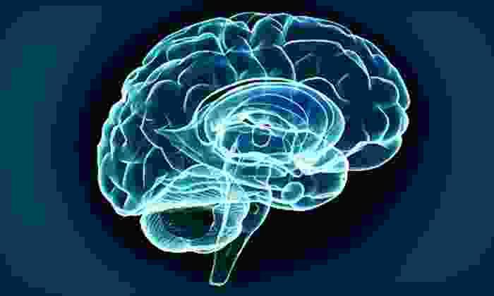 Santa Barbara Brain Fitness - Goleta: Brain-Fitness Training or Brain-Map Assessment at Santa Barbara Brain Fitness (75% Off)