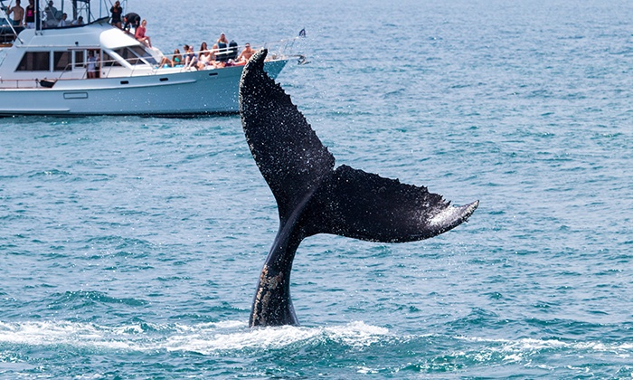Ocean Explorer Cruises - Newport Beach: One or Two Junior or Adult Whale-Watching and Drink Tickets from Ocean Explorer Cruises (Up to 63% Off)