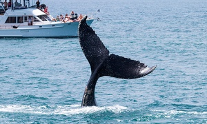 Ocean Explorer Cruises: One or Two Junior or Adult Whale-Watching and Drink Tickets from Ocean Explorer Cruises (Up to 63% Off)