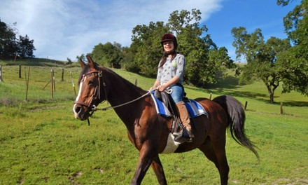One or Two Private Horseback-Riding Lessons or 90-Minute Riding Lesson at Pegasus Riding School (Up to 53% Off)