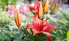 Hinsdale Nurseries - Hinsdale Nurseries: Flowers, Plants, and Garden Supplies at Hinsdale Nurseries (Up to 38% Off)