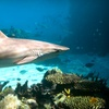 World Aquarium – Up to 59% Off Sharks Experience