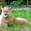 Up to 52% Off Animal-Park Visit