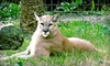 Jungle Adventures - East Orlando: Full-Day Visit for Two or Four to Jungle Adventures (Up to 52% Off)